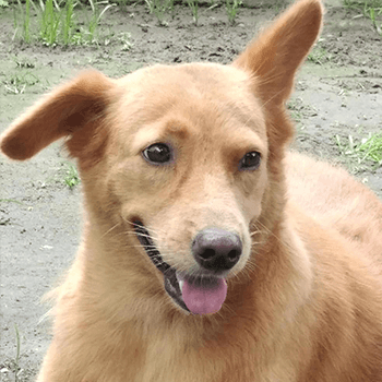 Rachel was found in a bag within a dog meat trade raid in the Philippines and was rescued along with all other dogs on-site. She now lives at the sanctuary where she roams freely with other dog meat trade survivors.