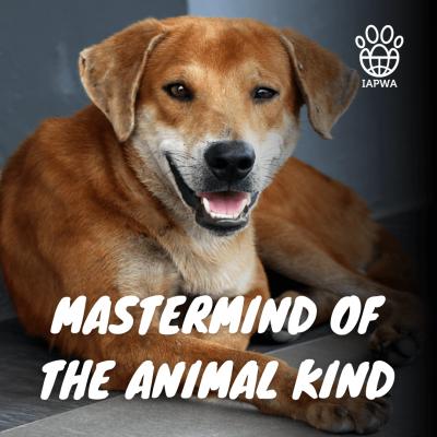 MASTERMIND OF THE ANIMAL KIND